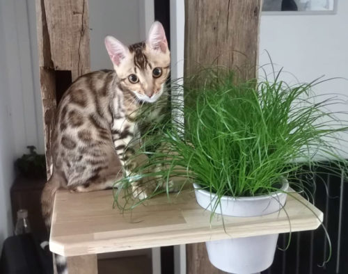plateforme herbe