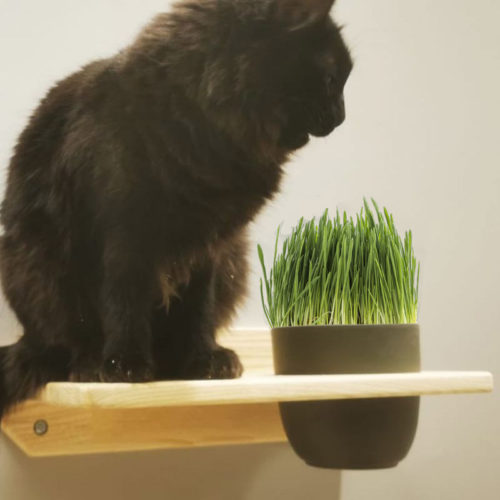 plateforme-herbe-chat