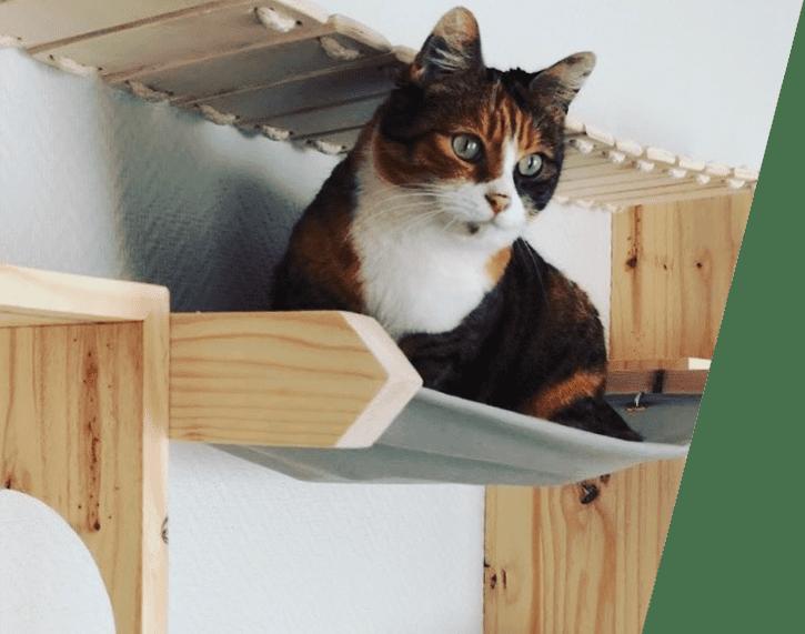 cabanes-et-hamac-chats