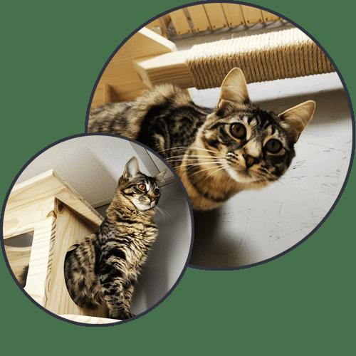 catalogue-le-pont-a-chat