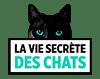 partenaire-vie-secrete-des-chats