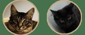 phara-pharell-chats