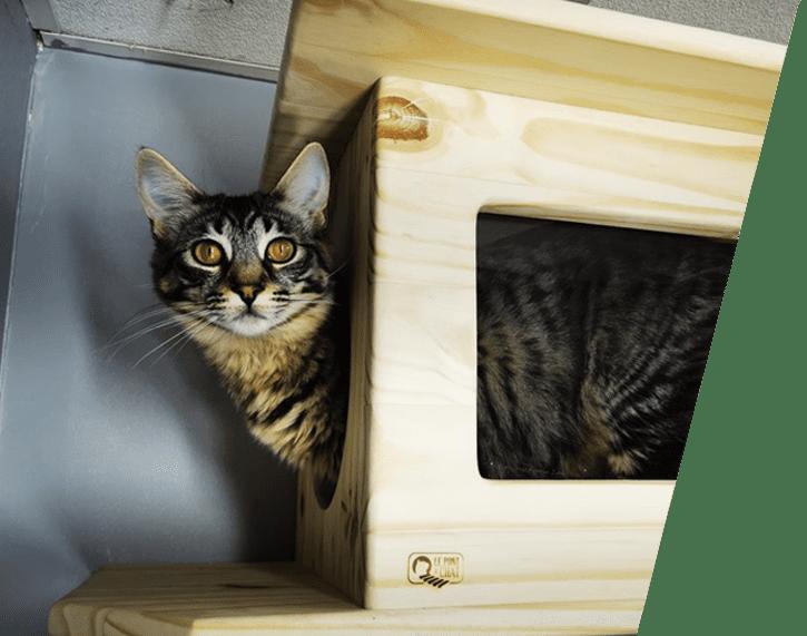 cabane-pour-chat
