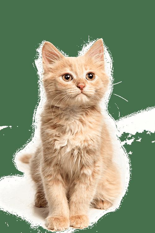 chat accessoires